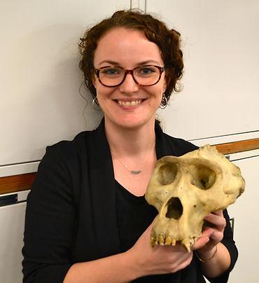 gorilla skull.JPG