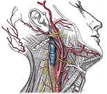 Anatomy banner.jpg