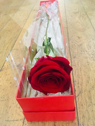Single boxed large headed red freedom rose with two chocolate truffles