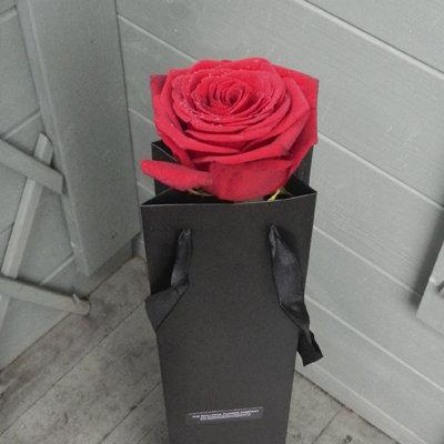Single Long Stem Dutch Red Naomi Rose