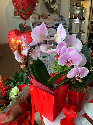 pink circle orchid