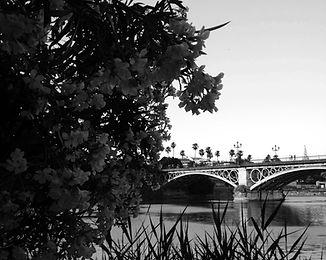 Sevilla5.jpg