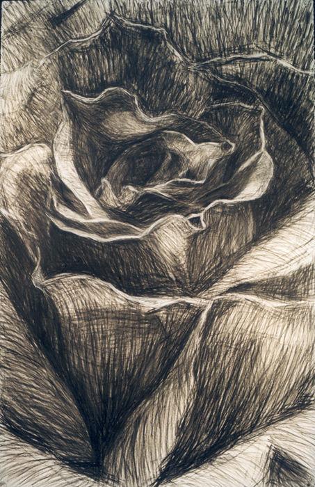 Rose is desire