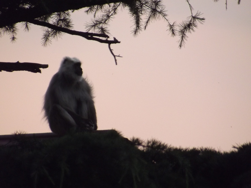 The Solitary Monkey