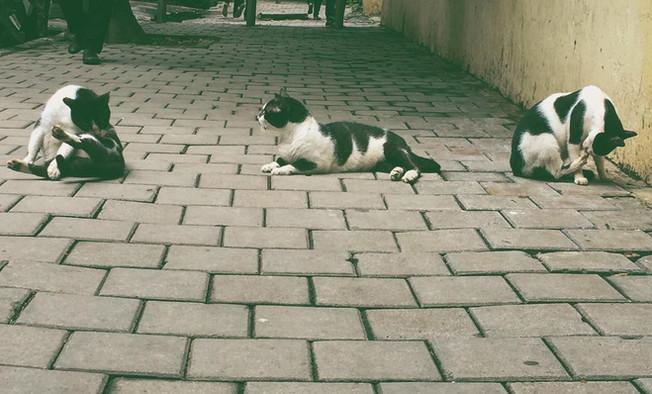 One Cat, Three Cats?