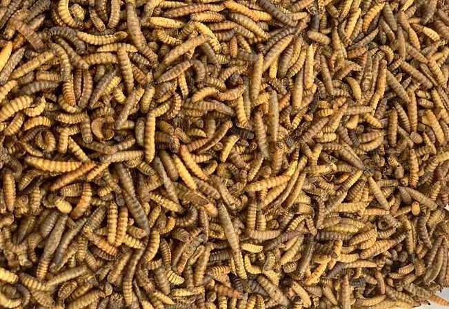 Black Soldier Fly Larvae BSFL Dried