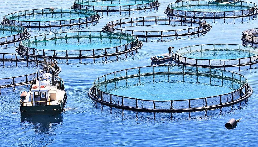 aquaculture-aerial-view_1600.jpg