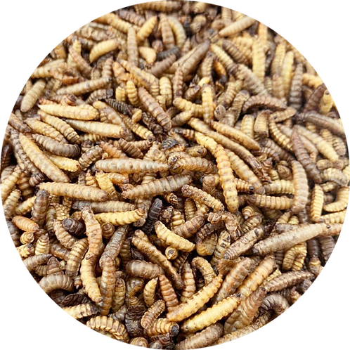 Black Soldier Fly Dried Larvae (100g)
