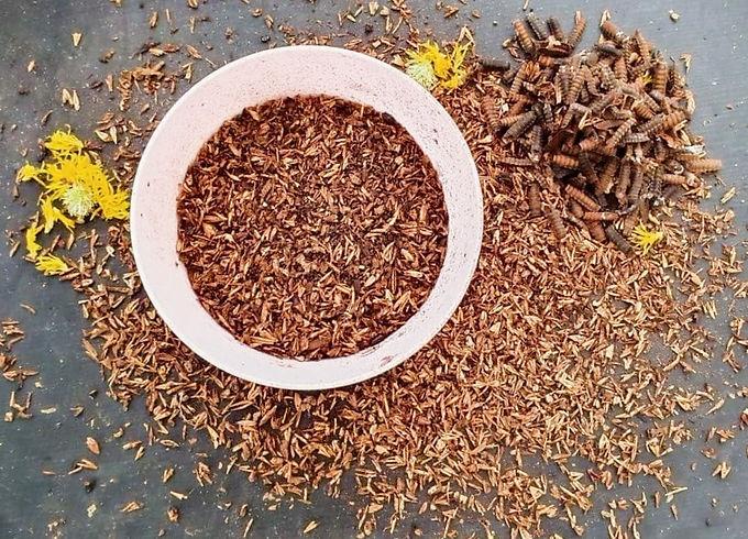 Black Soldier Fly BSF Organic Frass Fertiliser
