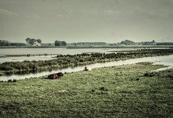 Humans climate change stories netherland