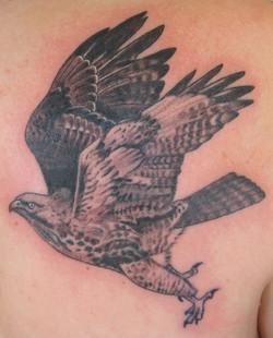 Hawk tattoo, Karina Mayorga