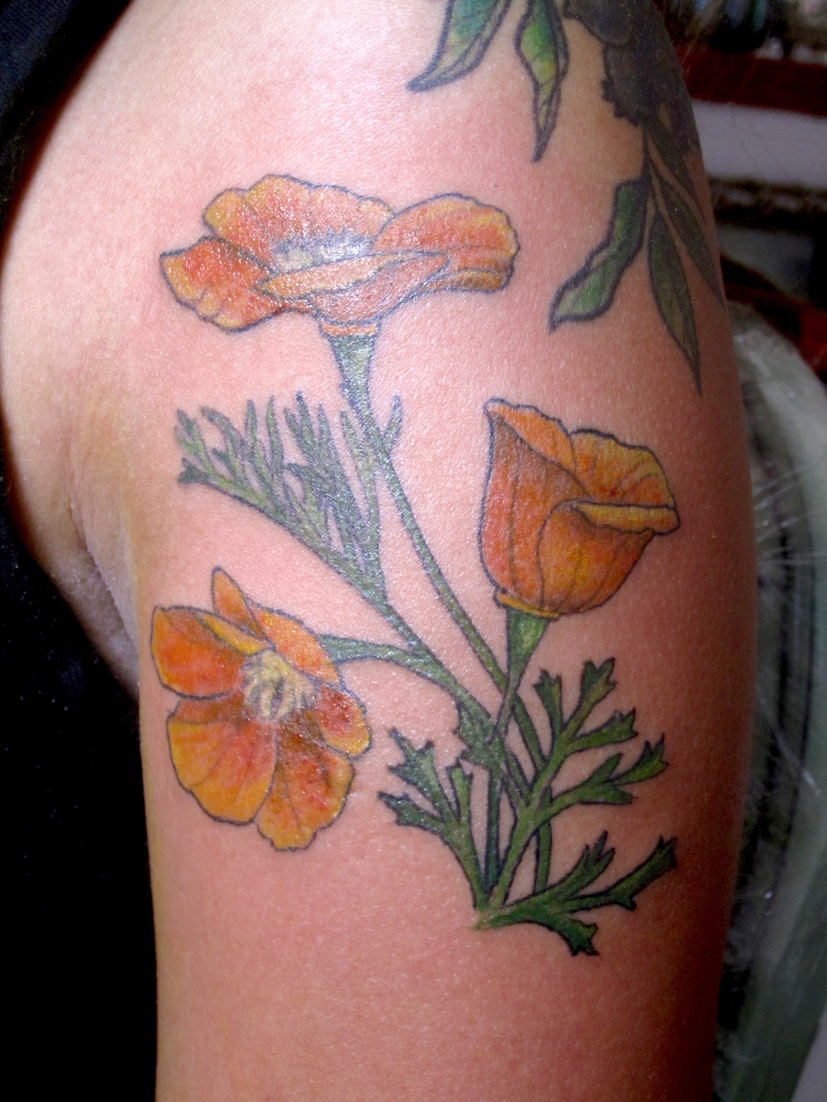 California Poppy, Karina Mayorga