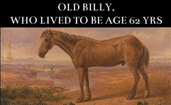 Old Billy