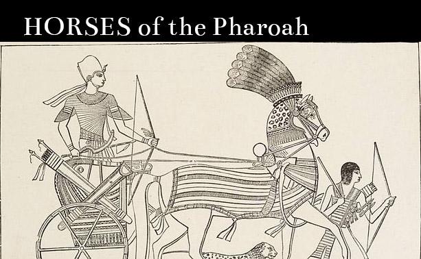 Horse of the Pharoahs