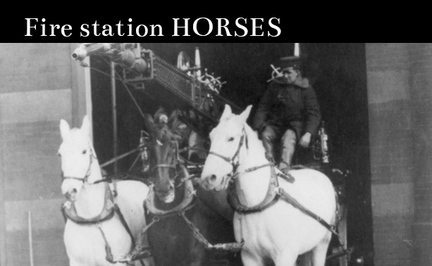 The Fire Station Horse
