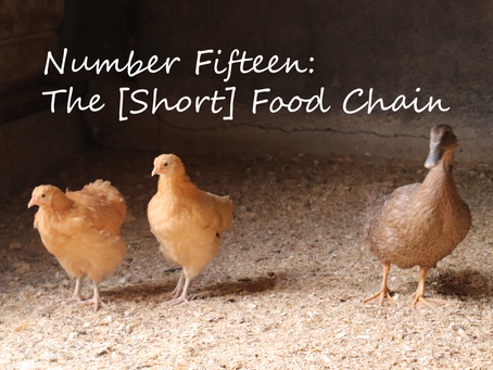 The [Short] Food Chain.