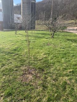 Plum Trees.jpg