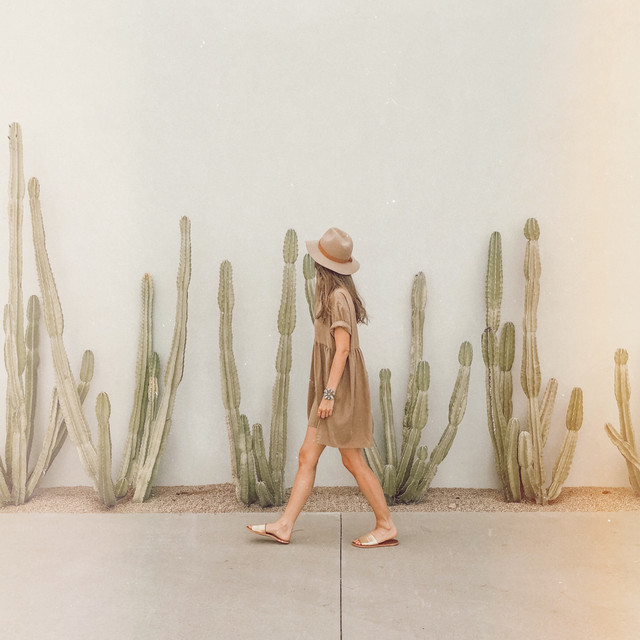 Walk among the Andaz cactus