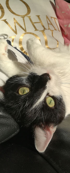 Schmusige Katze, Katze am Kratzbaum, Katze ruht sich aus, Lucky Cat mobile Katzenbetreuung Hamburg
