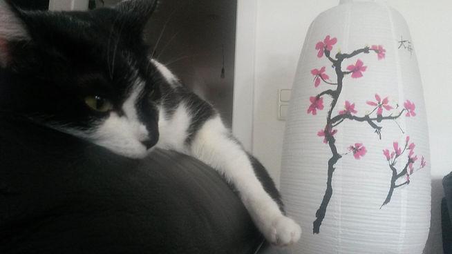 Katze liegt auf der Couch, Katze fühlt sich wohl, Lucky Cat mobile Katzenbetreuung Hamburg