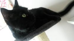 Blacky aus Wandsbek