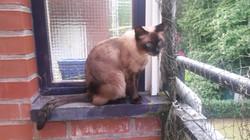 Cleo aus Langenhorn