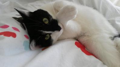 Katze ruht sich aus, Lucyk Cat mobile Katzenbetreuung Hamburg