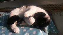 Katze Lilly geniesst die Sonnenstrahlen, Lucky Cat mobile Katzenbetreuung Hamburg