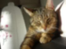 Schlummernde Katze auf der Couch, Katze ruht sich aus, Lucky Cat mobile Katzenbetreuung Hamburg