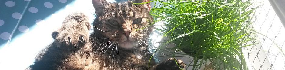 Schlafende Katze, Katzenportrait, Lucky Cat mobile Katzenbetreuung Hamburg