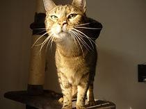 Neugierige Katze, Lucky Cat mobile Katzenbetreuung Hamburg