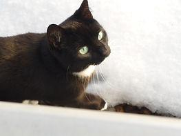 Katze liebt Schnee, Lucky Cat mobile Katzenbetreuung Hamburg