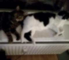Katzen liegen auf Kratzbaum, Katzen schauen aus dem Fenster, Lucky Cat mobile Katzenbetreuung Hamburg