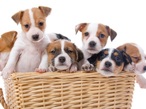 Top 10 Best Ways to Train Your New Puppy