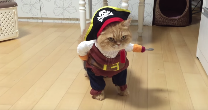 puss in boots/pirate