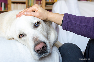 Why You Won't See Your Dog's Heartworm Symptoms, Until it's Advanced