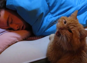 5 Tips To Get Your Cat To Let You Sleep
