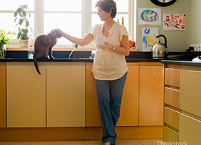 Does My Senior Cat Really Need Lab Work?