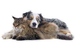 Point Grey Veterinary Hospital Senior Pets