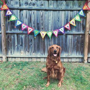 golden retriever birthday
