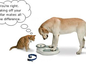 Monthly BLOG: 5 Reasons Why Pet Obesity Is a Serious Problem