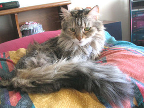 Helping Your Older Cat Deal With Aging