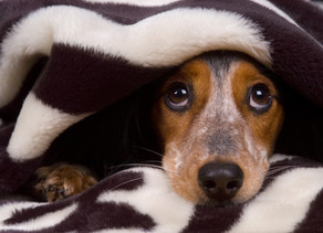 Monthly BLOG: My Dog is Scared of Thunder