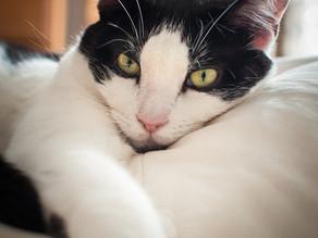 Top 5 Cat Toxins