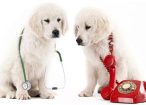 Emergency response: understanding a vet emergency