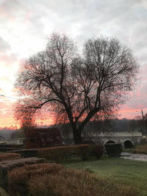 Saule et pont