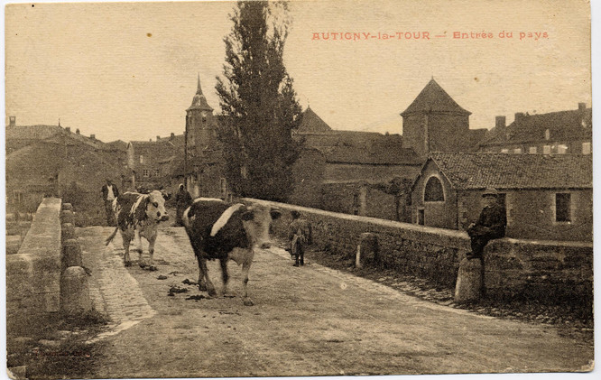 Vaches partant aux champs