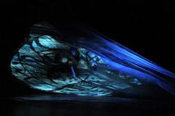 heliotrope bleue