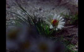 Screen Shot 2020-05-12 at 7.41.49 pm.png
