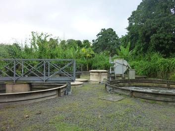 STEP (6).jpg